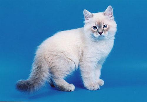 Имя для кота маскарадного