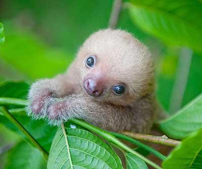 sloths_1