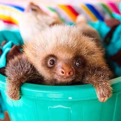 sloths_10