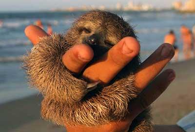 sloths_2