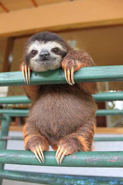 sloths_3