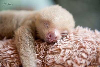 sloths_5