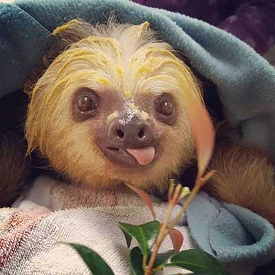 sloths_7