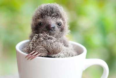 sloths_9