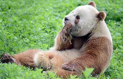 bear_7
