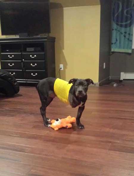 injured-puppy_2
