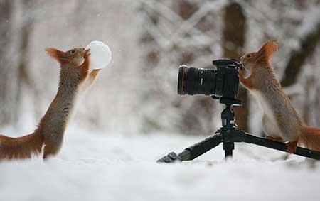 squirrels_1
