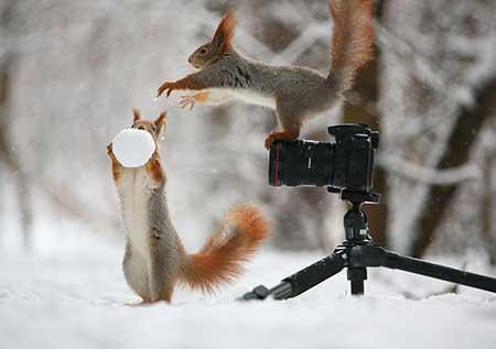 squirrels_2