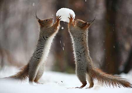 squirrels_3