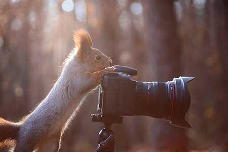 squirrels_6