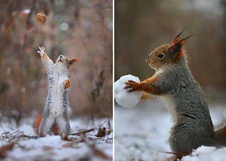 squirrels_9