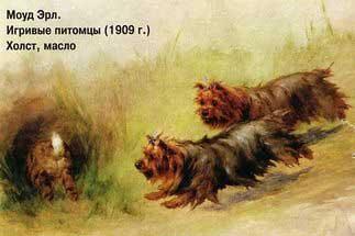 jorkshirskij-terer_011