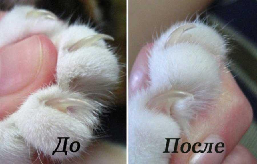Как правильно подстригать когти кошке