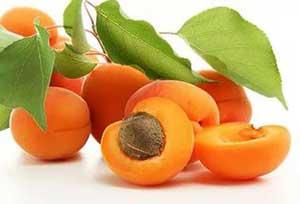 абрикосы тилтон