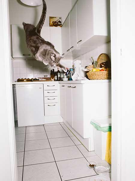bouncing_cats_1