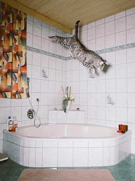bouncing_cats_8