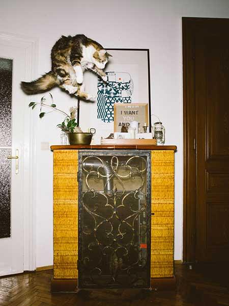 bouncing_cats_9