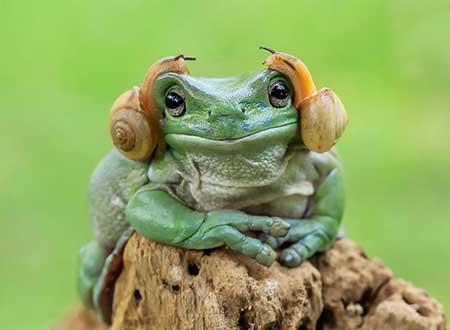 unusual_frogs_1