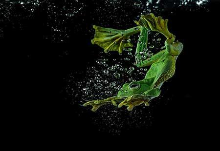 unusual_frogs_5