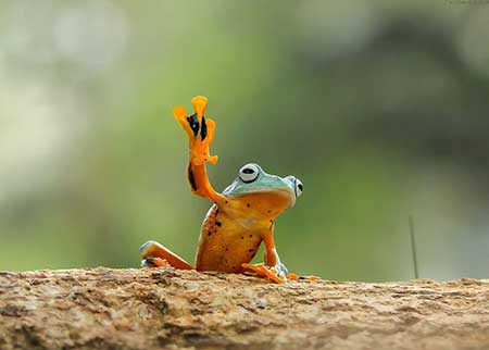 unusual_frogs_7