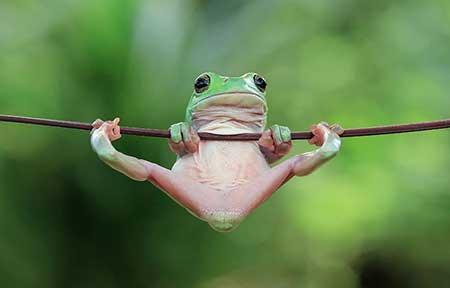 unusual_frogs_9