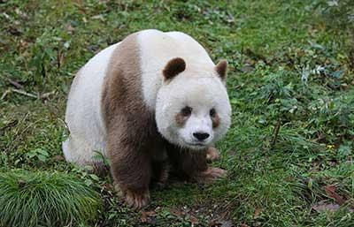 bear_2