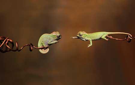 chameleons_1