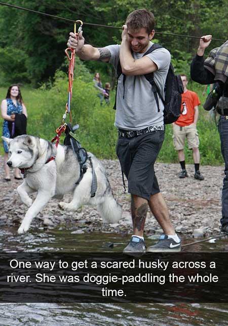 husky_10