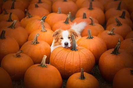 pumpkins_12