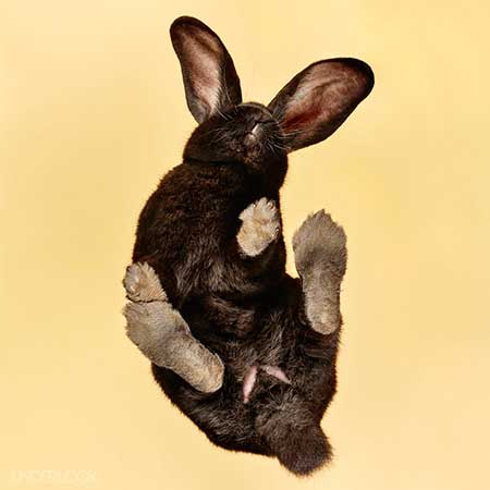 rabbits_9