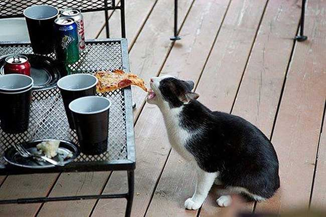 Собака или кошка воруют со стола, что делать, если собаки или кошки воруют еду со стола, как отучить собаку или кошку лазит на стол.