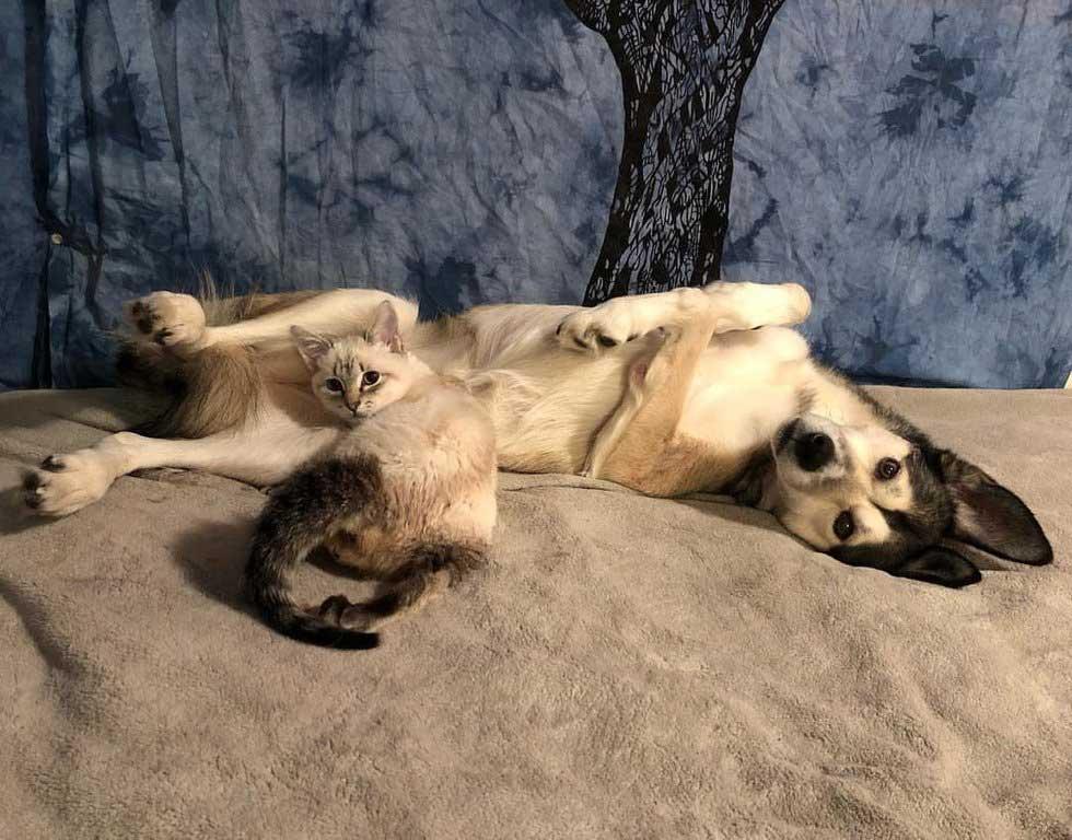 Собака выходила парализованного котенка