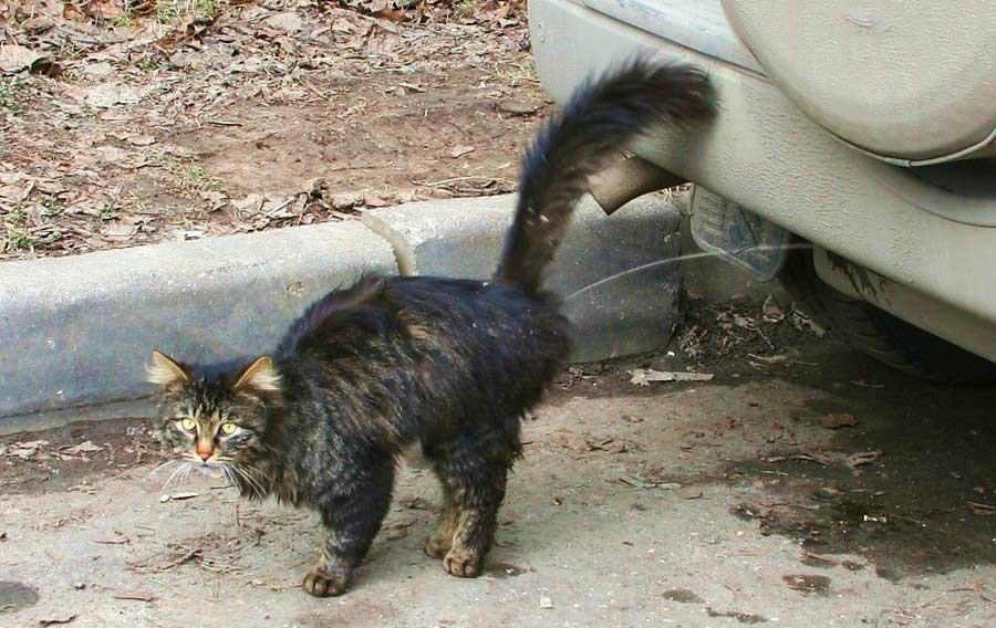 Что делать, если кошка гадит в неположенном месте