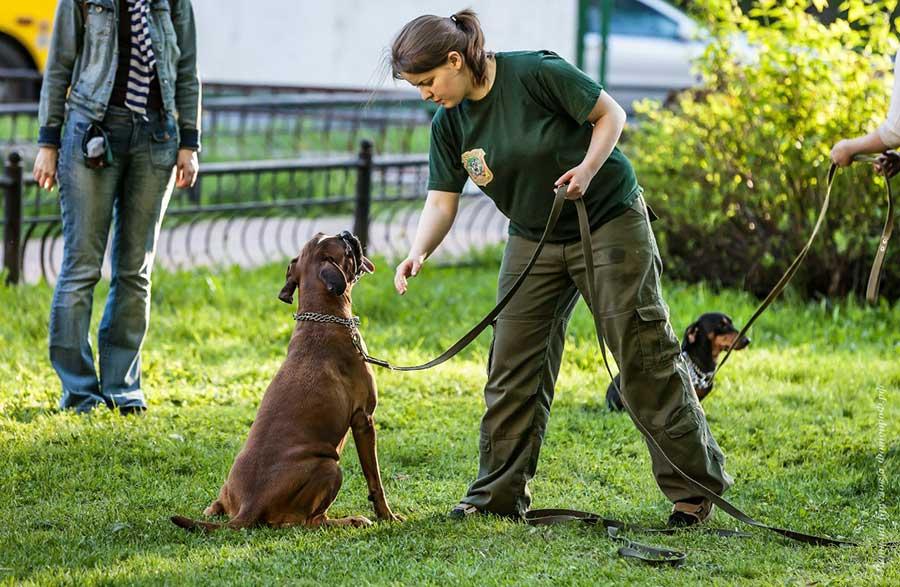 Как дрессировать собаку в домашних условиях