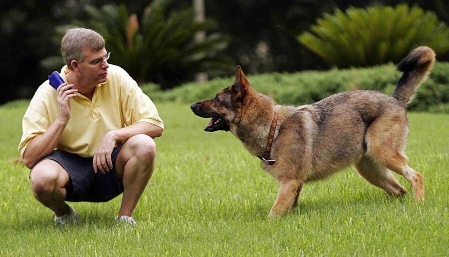 Как научить вашу собаку выполнять команды