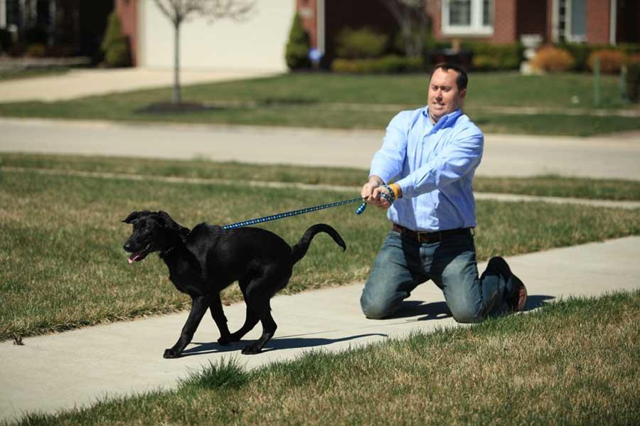 курсы дрессировки собак