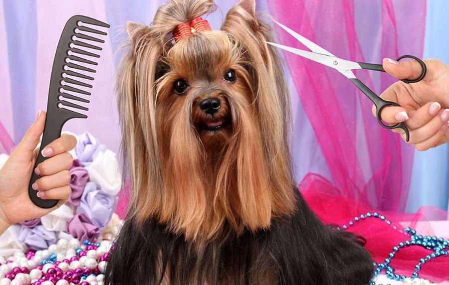 Грумминг собак, что такое грумминг
