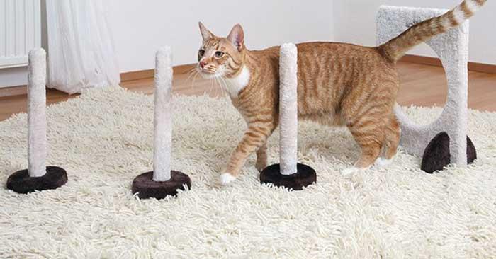 Как дрессировать кошку в домашних условиях