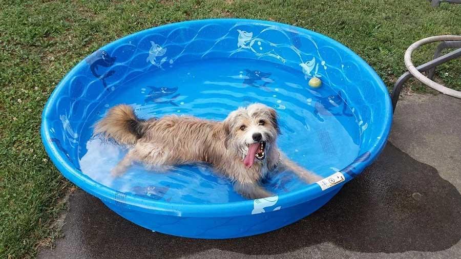 Как помочь собаке в жару или как собака переносит жару