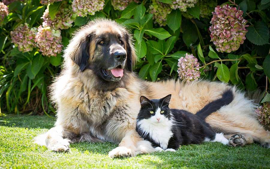 Как примерить собаку и кошку