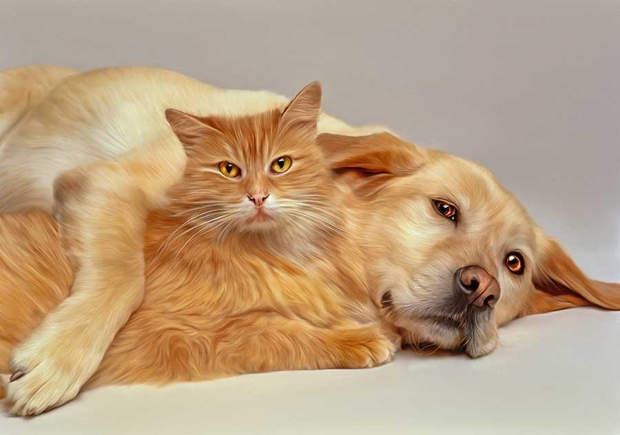 Картинка с собакой и котом