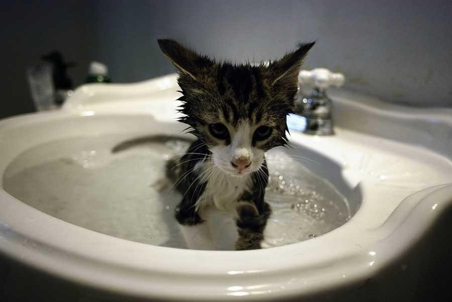 Как выкупать котенка в первый раз