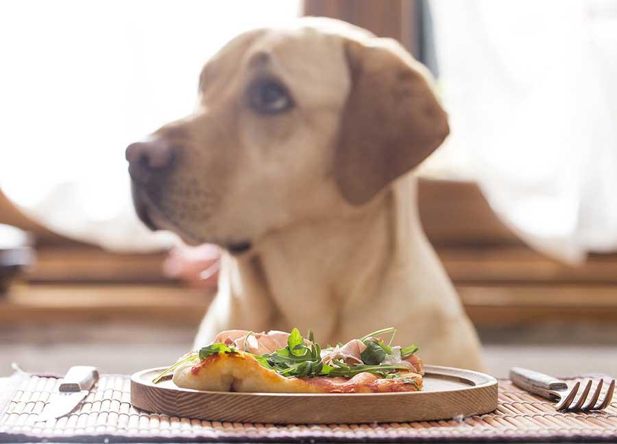 Как правильно готовить собакам