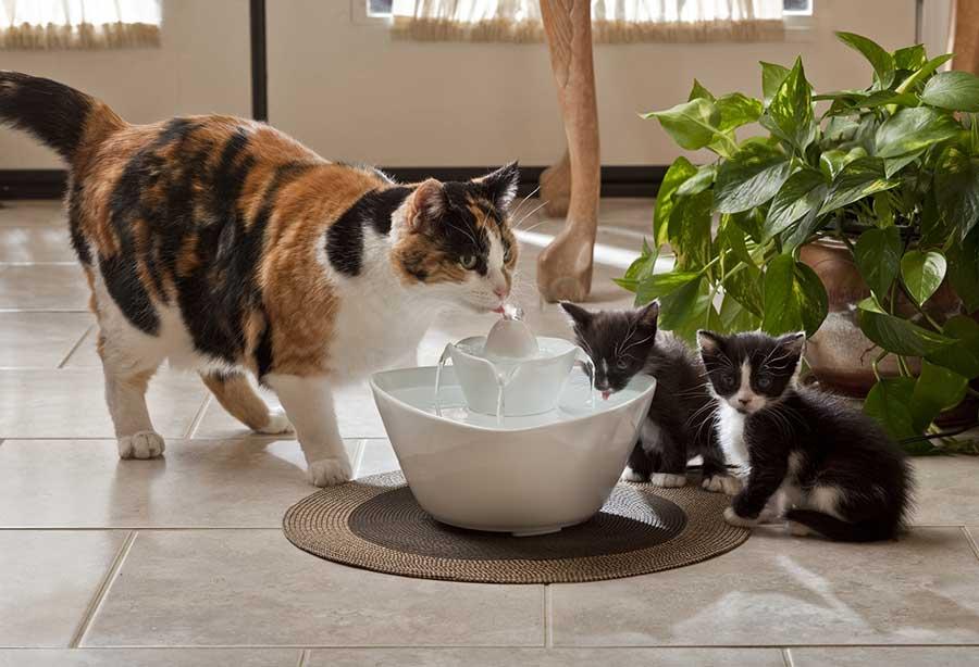Почему кошка не пьет из миски?