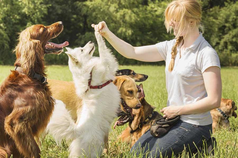Самые распространенные ошибки в дрессировке собак