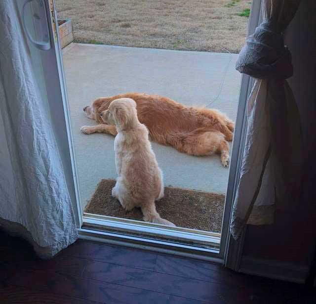 Щенок стал поводырем для старого пса