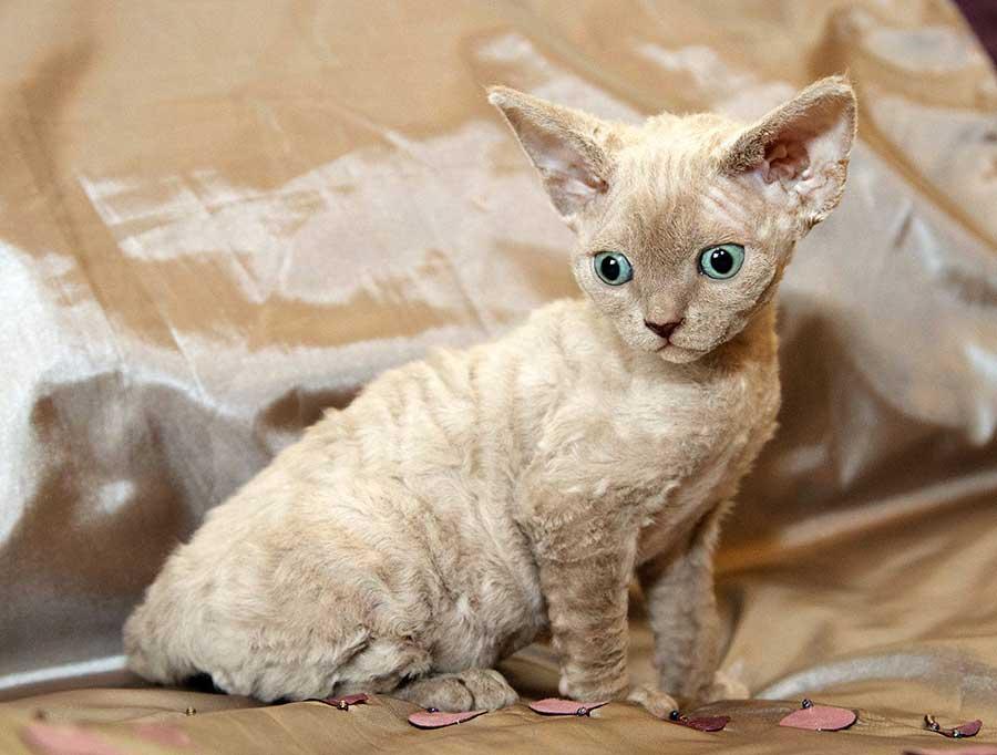 Картинки линяющих кошек