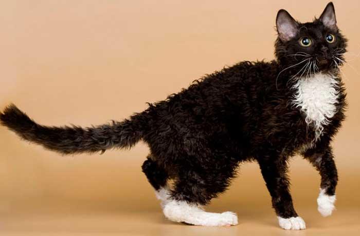 Существуют ли кошки, которые не линяют?