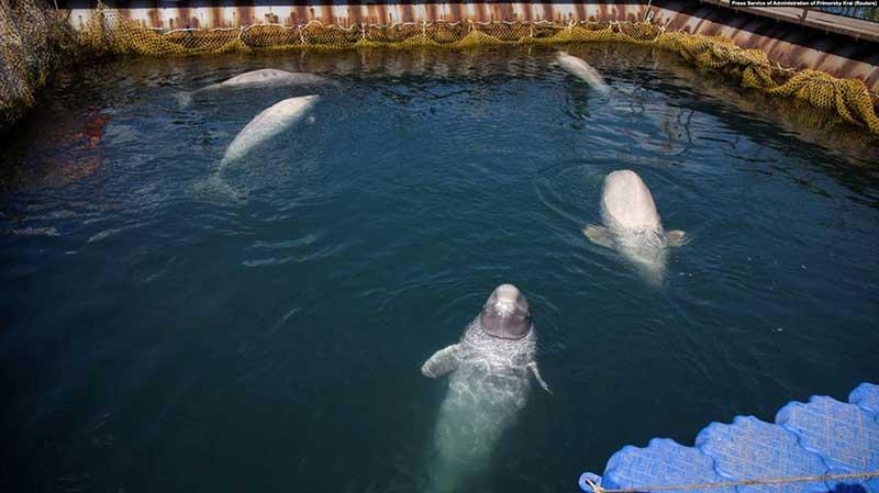 «Китовая тюрьма»… «прямая линия» решила ДАЛЕКО не все проблемы