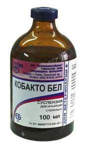 kobakto-bel_001